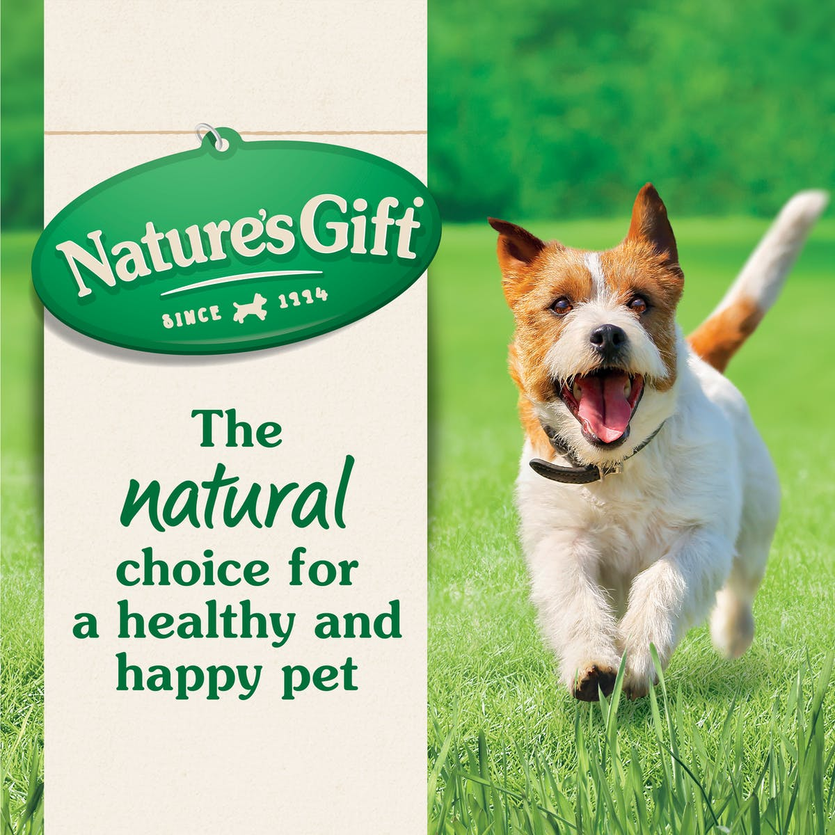 Nature's Gift | Kangaroo & Vegetable | Wet dog food | Top of pack