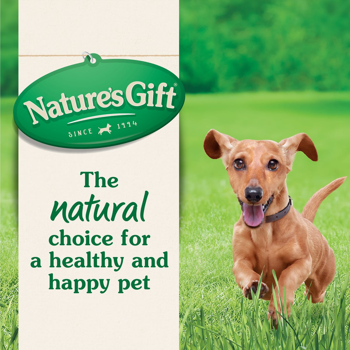 Nature's Gift | Toy & Small Breed with Chicken & Mixed Vegetables | Dry dog food | Right of pack